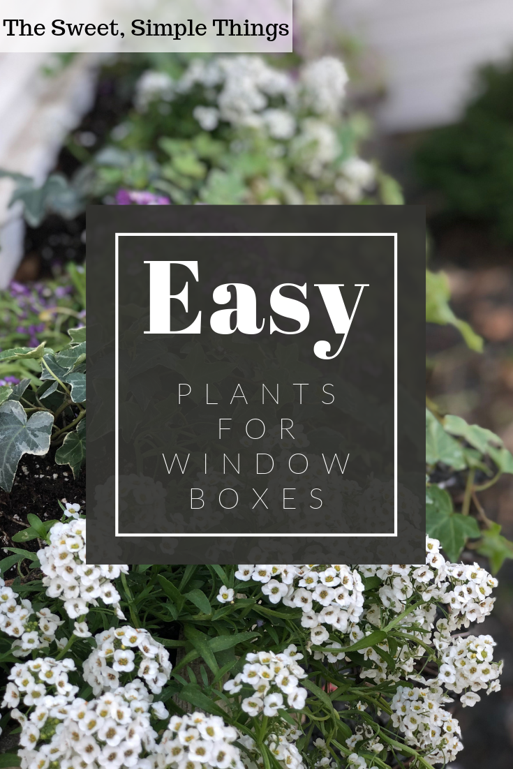easy-plants-for-window-boxes