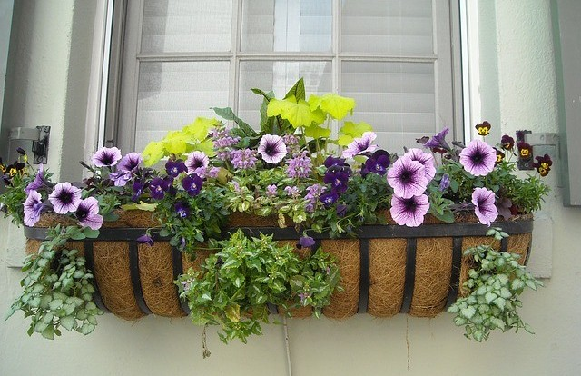 beautiful-window-box